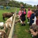 Year 3's trip to Whitehouse Farm!