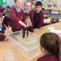 Y3's Archimedes Investigation